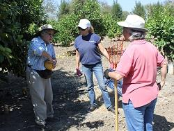 UCCE Master Gardener sharing a pummelo